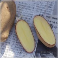 blog_100228_03.jpg
