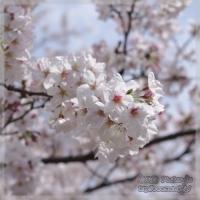 blog_100403_03.jpg