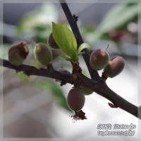 blog_100411_04.jpg