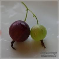blog_100708_02.jpg