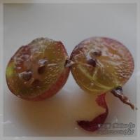 blog_100708_03.jpg