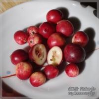 blog_101205_02.jpg