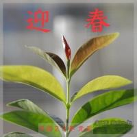 blog_110101_01g.gif