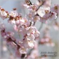 blog_110306_03.jpg