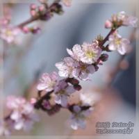 blog_110328_03.jpg
