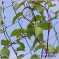 blog_110725_01.jpg