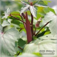 blog_110827_01.jpg