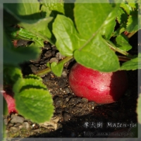 blog_120115_01.jpg