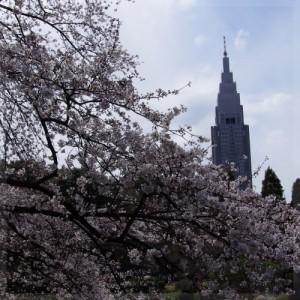 新宿御苑 Shinjuku Gyoen