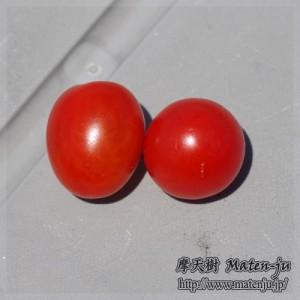 ミニトマト2 mini-tomatoes