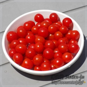 ミニトマト3 mini-tomatoes