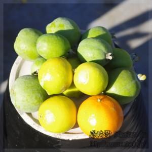 Todays fruits