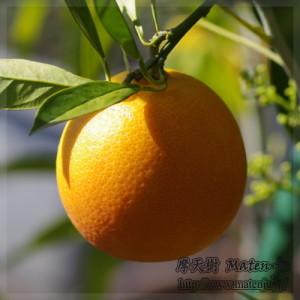 Blad Orange01