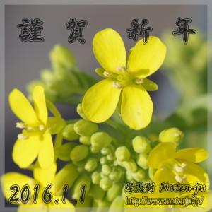 チンゲン菜の花