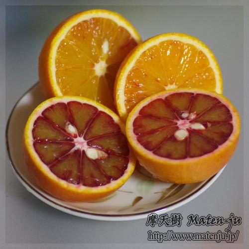 Blad Orange